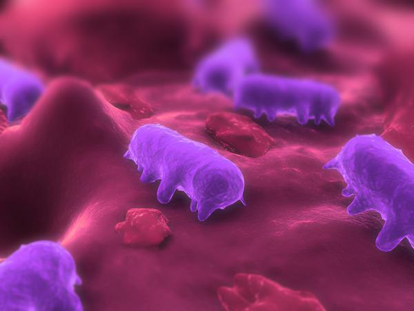 Salmonela pod mikroskopom