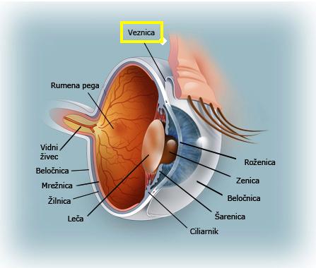 Očesna veznica
