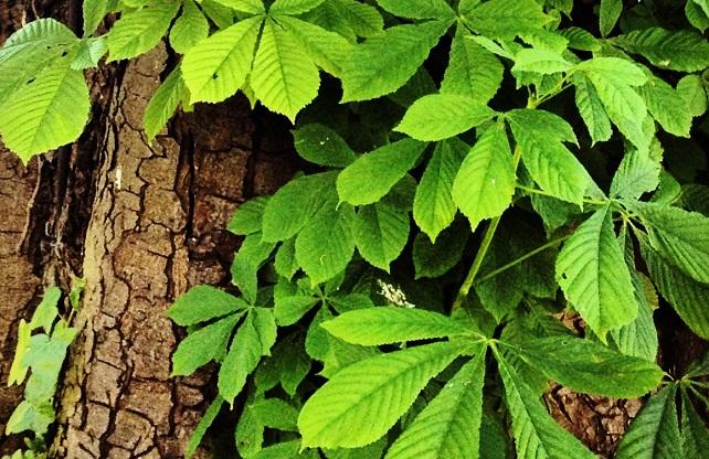 Vir: herbsforhealthandwellbeing.wordpress.com