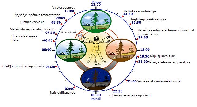 biološka ura